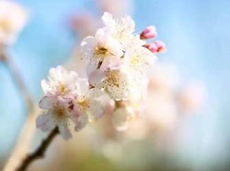 繁花逢春开,学习踏时来——记华师大二附中2020年见习教师线上培训活动